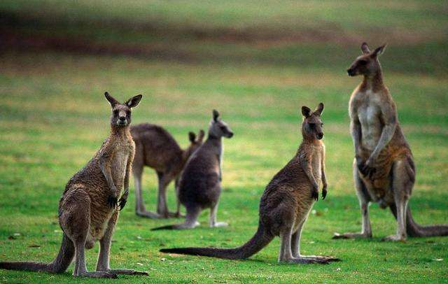 澳洲适合移民吗